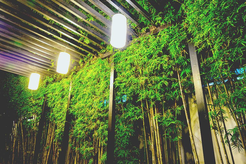 Decorative lighting inside tropical bamboo garden at night web