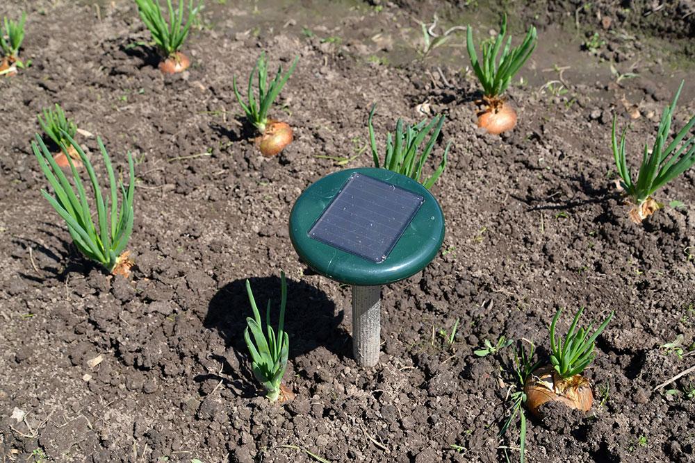 solar ultrasonic pest repeller for moles